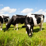Valuable information helps us to approach dairy farmers successfully